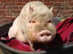 WDR - Tiere suchen ein Zuhause - Hof Butenland - Prinz Loui